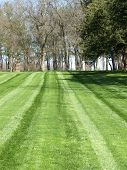 Lines Of Grass