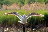 pássaro solitário
