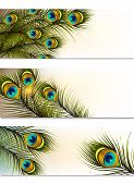picture of fern  - Vector set of business cards with peacock ferns for design - JPG