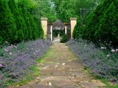 Flagstone Path Lined With Lavender And Alium