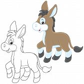 image of burro  - Funny little neddy friendly smiling - JPG