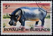 stamp printed in Kingdom of Burundi shows an African animal - Hippopotamus