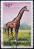 stamp printed in Kingdom of Burundi shows an African animal - Giraffe