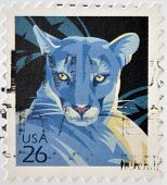 stamp printed in USA shows Florida Panther representative of cougar (Puma concolor)