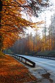 Road In Beautiful Autumn Wood Poland