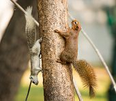Squirrel Or Small Gong