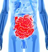 stock photo of anus  - 3d rendered illustration of the human digestive system - JPG