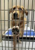 a dog in a local shelter (focus on the paw) shot at high ISO