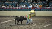 Rodeo Clown And Bull