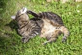 stock photo of tickle  - Cute cat enjoys his life outdoors in the garden