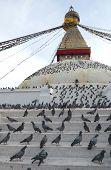 Pigeons And Boudhanath Stupa