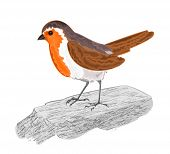 Robin Bird On The Stone