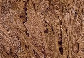 Gnarled Wood Closeup