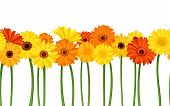 image of chrysanthemum  - Vector horizontal seamless background with orange and yellow gerbera flowers - JPG
