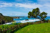 foto of mendocino  - California Coast in Mendocino - JPG