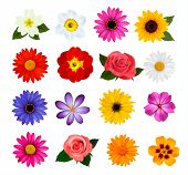 picture of gerbera daisy  - Big collection of colorful flowers - JPG