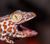 Fantastic Macro Red Iguana Eye