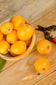 foto of loquat  - A bowl with freshly picked loquats next to old pruning shears - JPG