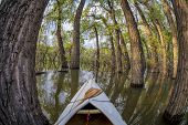 canoe bow with a paddle on a lake with submerged trees - distorted fisheye perspective - Lonetree Re