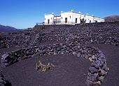 Bodega and vineyard, Lanzarote.