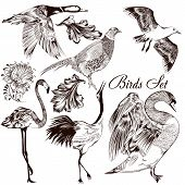 Collection Of Vector Detailed Hand Drawn Birds