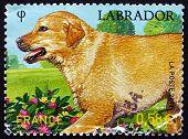 Postage Stamp France 2011 Labrador Retriever, Dog Breed