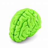 Green Human Brain Close Up. Isolate. Contains Clipping Path