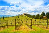 Tuscany, Vineyard, Cypress Trees And Village. Rural Landscape, Italy, Europe