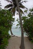 Palm At Tropical Beach Maldives