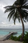 Palm And Concrete Pier At Ocean Beach Maldives