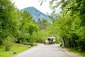 Horse Cart On A Road In Land