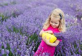Happy Little Girl Is In A Lavender Field