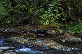 Fast water stream with a lot of fallen yellow leaves at autumn, Cemerno mountain