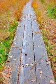 Wooden Walk Way Nature Fall Season Withered Grass