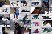 Collage of horses playing in snow