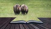 Black Rhinoceros Diceros Bicornis Michaeli In Captivity  Conceptual Book Image