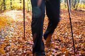Nordic Walking Sport Run Walk Motion Blur Outdoor Person Legs Forest Fall Autumn