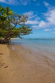 The tree by the sea, Anini Beach, Kauai
