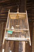 Gray Woodpecker (dryocopus Pileatus) In Wooden Cage In Thailand