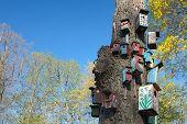 stock photo of nesting box  - Nesting - JPG
