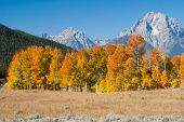 Autumn Colors At Grand Tetons