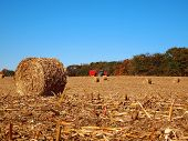 Dried Round Bale In Corn Field