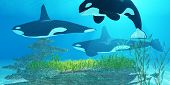 Killer Whale Reef