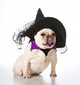 french bulldog wearing witch costume