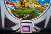 Fishes in submarine window - underwater marine life