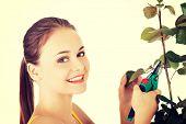 stock photo of prunes  - Happy gardener woman using pruning scissors - JPG