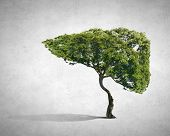 stock photo of liver  - Conceptual image of green tree shaped like human liver - JPG