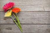 stock photo of gerbera daisy  - Three colorful gerbera flowers on wooden table with copy space - JPG
