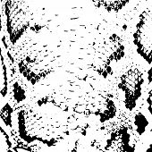 image of lizard skin  - Snake skin abstract texture - JPG