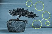 image of bonsai  - Edited photograph of a bonsai tree with a polygonal structure - JPG